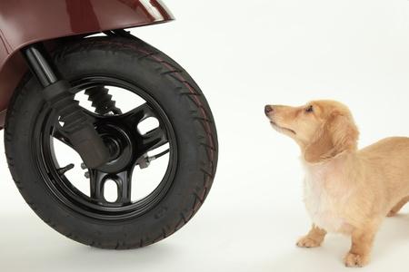 自転車と白い背景の上犬 写真素材