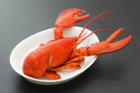 Red Lobster on black background photo