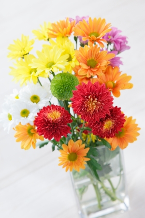 funeral background: Colorful chrysanthemum with white background