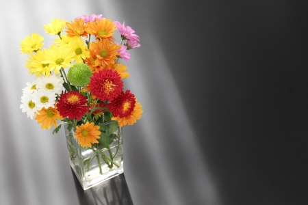Colorful chrysanthemum with space for copy photo