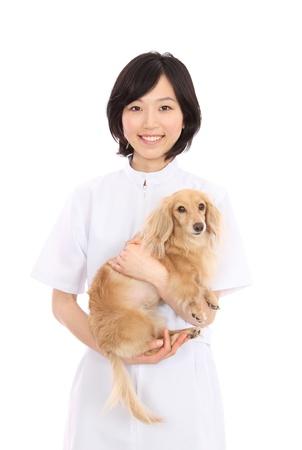 白い背景のダックスフントで日本の若い女性は、美しい 写真素材