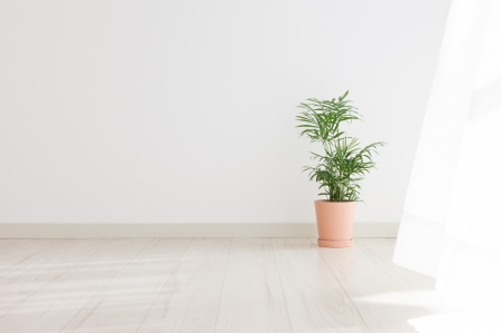 Potted Palm in the room Stock Photo