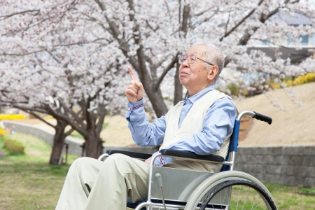 old age care: Japanese senior man sitting on a wheelchair background of cherry