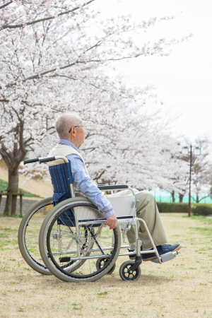 asian old man: Japanese senior man sitting on a wheelchair background of cherry