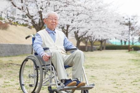 Japanese senior man sitting on a wheelchair background of cherry