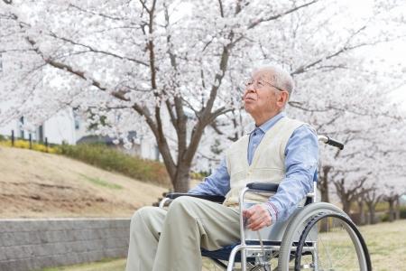 vecchiaia: Giapponese uomo anziano seduto su una sedia a rotelle sfondo di ciliegia