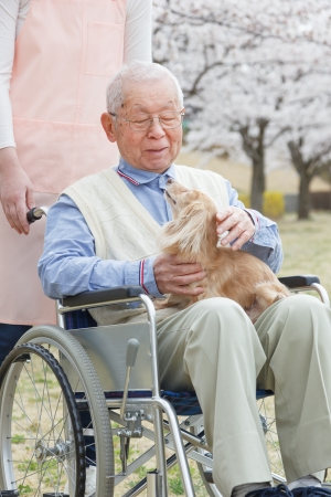 Japanese senior man sitting on a wheelchair background of cherry Stock Photo - 20047974
