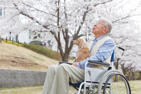 Japanische �lterer Mann sitzt auf einem Rollstuhl Hintergrund der Kirsche