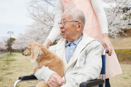 persona en silla de ruedas: Hombre mayor japon�s sentado en una silla de fondo de la cereza