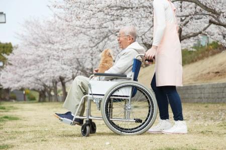 チェリーの車椅子の背景に座っていた日本人のシニア男性