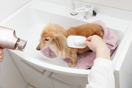 Dryers and brushes and dog Stock Photo
