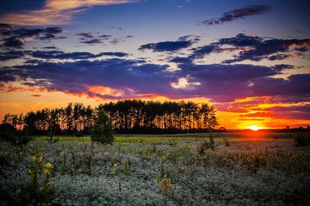 ukraine: wildflowers Ukraine, Ukraine, Eastern Europe, Polesie