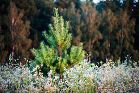 eastern europe: wildflowers Ukraine, Ukraine, Eastern Europe, Polesie