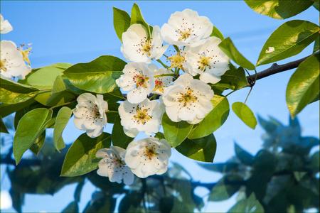 ukraine: Flowering gardens in Ukraine