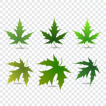 set of vector maple leaves isolated on white background Illustration