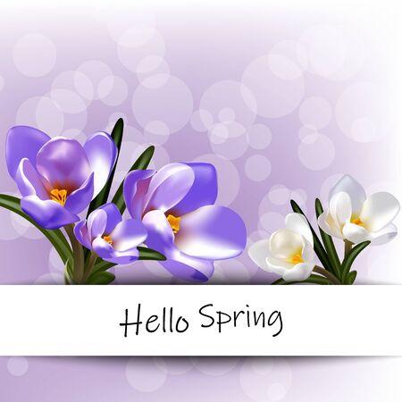 Spring hello, early crocus flowers. Design for poster, postcard. Eps 10 illustration vector Ilustracja