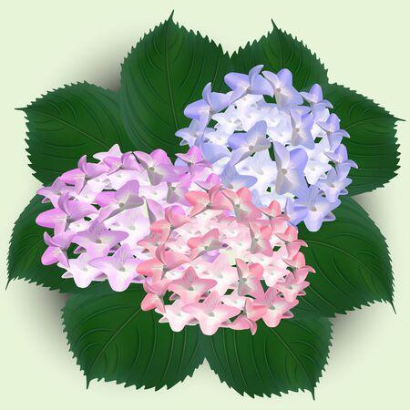 hydrangea, watercolor flowers greeting card bouquet
