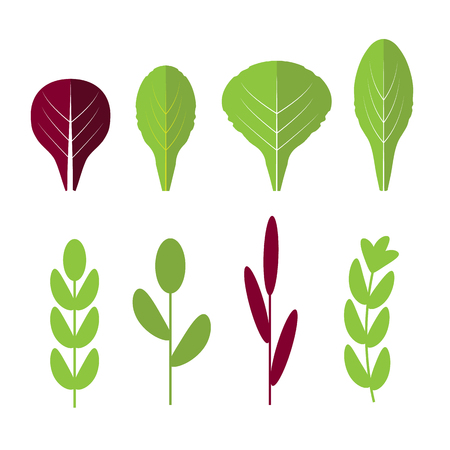 escarole: Salad ingredients. Leafy vegetables vector flat icons set. Organic and vegetarian, borage and radichio