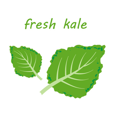 green crab: Fresh kale vector illustration
