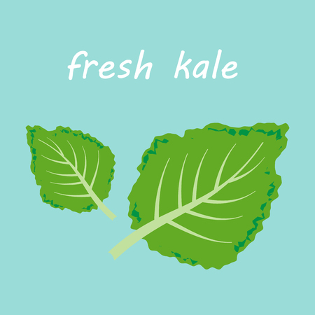 inflammatory: Fresh kale vector illustration