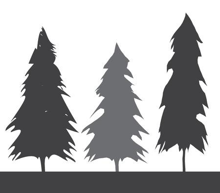 Pacific northwest old growth evergreen tree Illustration