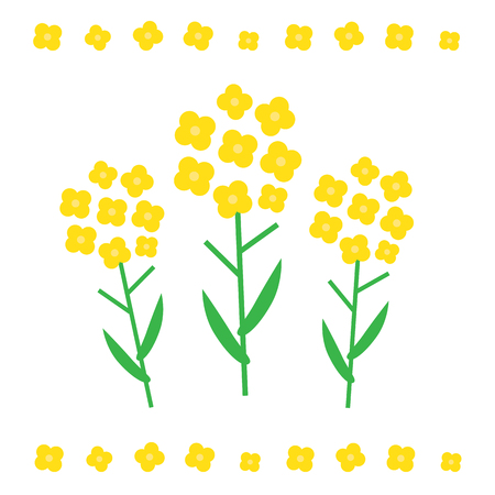 brassica: Canola flower vector illustration. Canola flower concept in flat style. Canola flowers Illustration