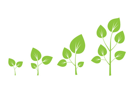 growth: Tree growth vector diagram. Green tree growth