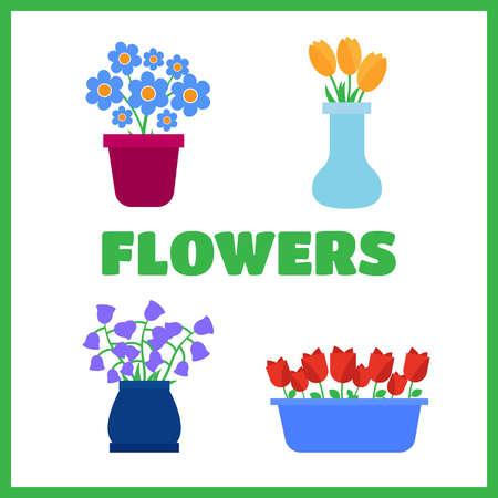 Spring flowers in pots and flower. Flowers shop