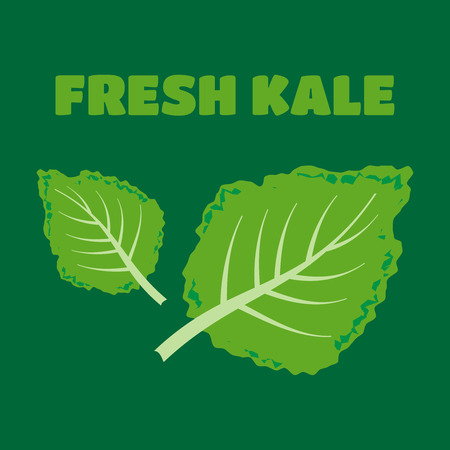 dietary: Fresh kale vector illustration. Fresh kale vector Illustration