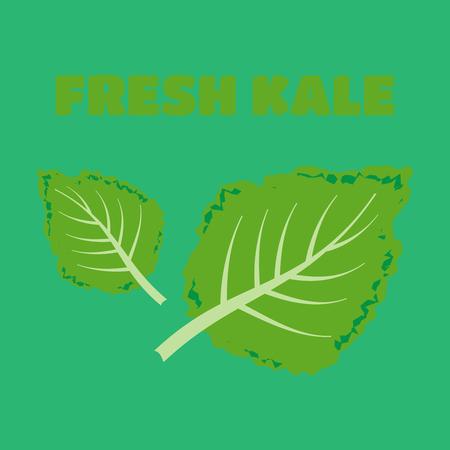 Fresh kale illustration. Kale set