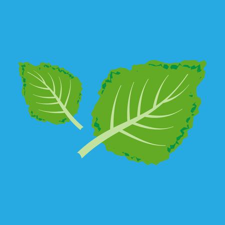 Fresh kale illustration Illustration