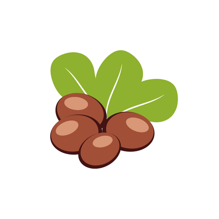 heath: Shea nuts with green leaves vector illustration.