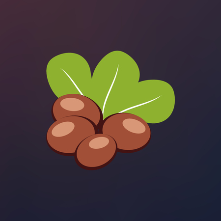 Shea nuts with green leaves vector illustration.