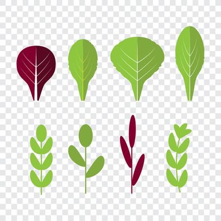 Salad ingredients . Leafy vegetables. Organic and vegetarian, borage and radichio