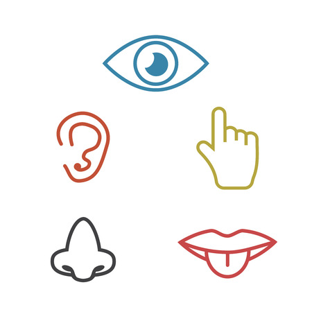 Icon human senses: vision, smell, hearing, touch, taste. Icons sense nose, ear, eye, hand vector  イラスト・ベクター素材
