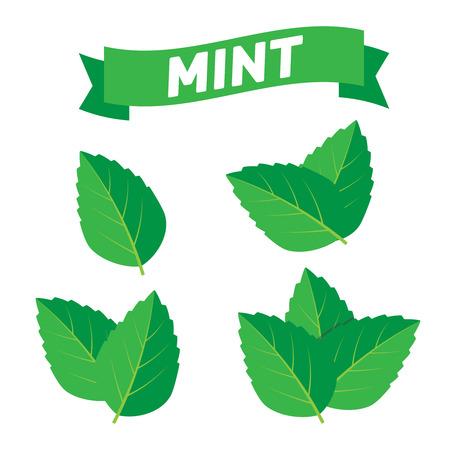 Set di illustrazione vettoriale verde menta. Menta logo vettoriale Logo