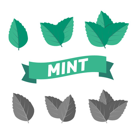 Mint green vector illustration set.