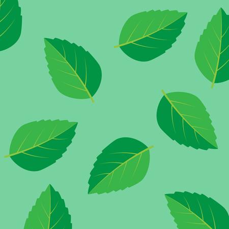 Fresh mint leaf.