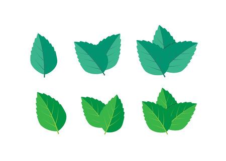 Mint green vector illustration set. Mint logo vector Logo