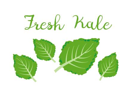 kale icon vector. Fresh kale vector illustration Illustration