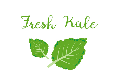 kale icon vector. Fresh kale vector illustration Illusztráció