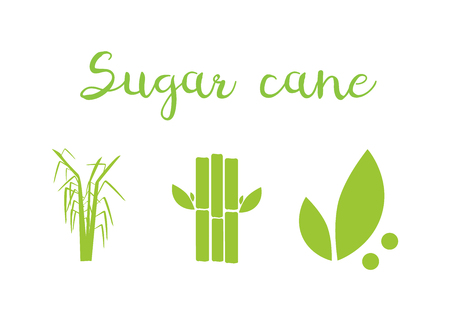 Sugar and sugar cane labels. Sugar cane vector illustration