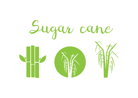 Sugar cane vector illustration. Sugar and sugar cane labels Illustration