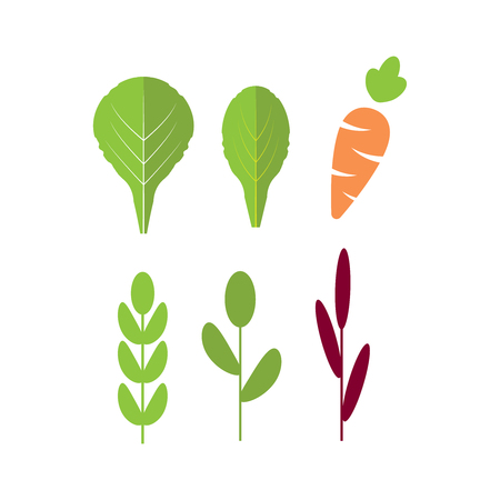 Salad ingredients with carrot. Leafy vegetables with carrot flat icons set. Organic and vegetarian, borage and radichio.