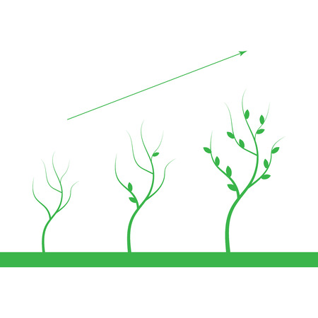 Tree growth diagram. Growth plant vector icon