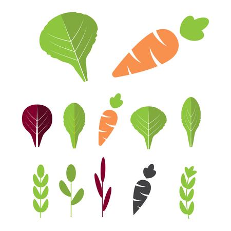 Salatzutaten mit Karotten. Blattgemüse mit flachen Karottenikonen eingestellt. Bio und vegetarisch, Borretsch und Radichio.