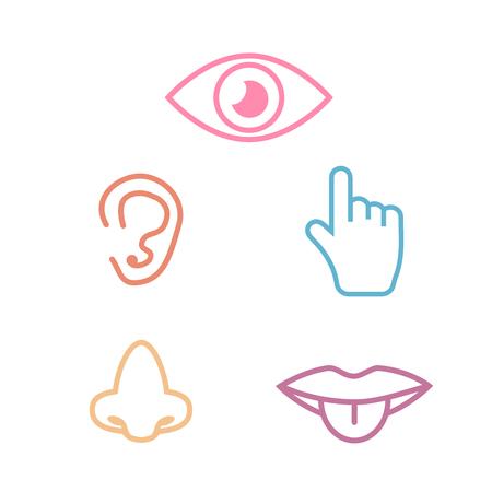 Couleur de la collection d'icônes 5 sens. Jeu d'icônes de cinq sens Vecteurs