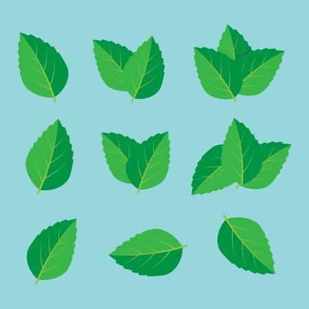 Foglia di menta fresca. Logo vettoriale di foglie di menta