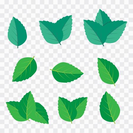 Green tea, mint or tree leaf nature. Mint leaf vector illustration  イラスト・ベクター素材