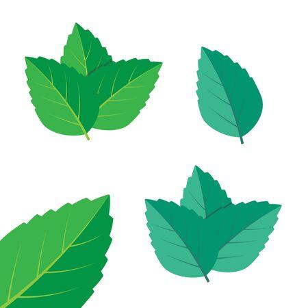 Mint green vector illustration set. Mint  vector Çizim